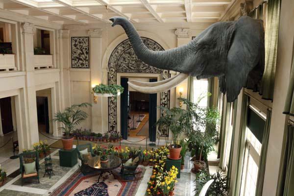 george eastman museum - elephant
